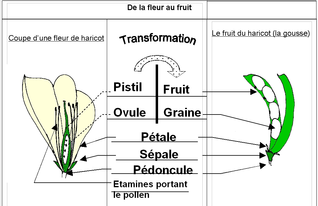 Cours Le Peuplement Des Milieux Au Cours Des Saisons Svtbelrose Info